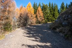 Forest road in the mountains. Roadside fir trees.  Royalty Free Stock Photography