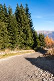 Forest road in the mountains. Roadside fir trees.  Royalty Free Stock Image