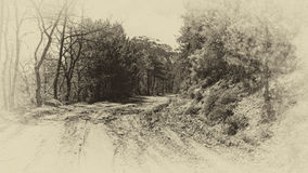 Forest Road Mud old monochrome photo. An old monochrome photo of a road with mud in the forest Royalty Free Stock Photos