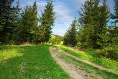 Forest Road, Nature Mountain Landscape with Road and Trees Stock Photo