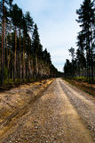 Forest road. Stock Photo