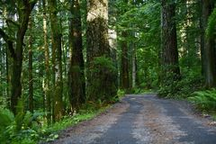 Forest Road North California Royalty Free Stock Photo