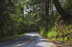 Forest road in northern California Stock Photography