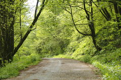 Forest Road. An old, single lane road winds through the forest Royalty Free Stock Photo