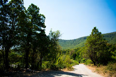 Forest Road på morgonen royaltyfri fotografi