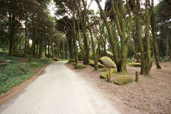 Forest Road Panorama Royalty Free Stock Photography