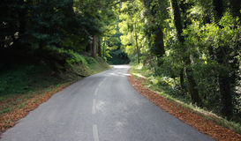Forest Road Panorama Royalty Free Stock Photos