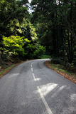 Forest Road Panorama Royalty Free Stock Image