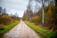 Forest road in late fall. Forest road path in late fall with bare trees stock images