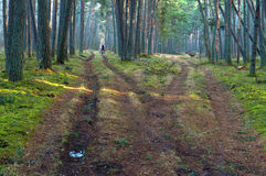 Forest, road, pathway, green, coniferous, travel, bike, adventure, crossroads Royalty Free Stock Images