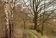 Forest Road For Pedestrians arkivfoto