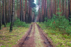 Forest road. Royalty Free Stock Photography
