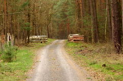 Forest road. Stock Photos