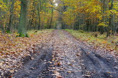 The forest road. Royalty Free Stock Photo