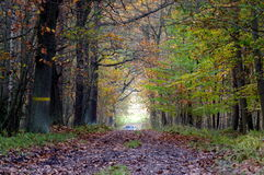 The forest road. Royalty Free Stock Image