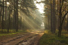 Forest road. Royalty Free Stock Image