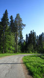 Forest and road Stock Images