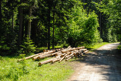 Forest. The road through the forest in Poland Royalty Free Stock Photography
