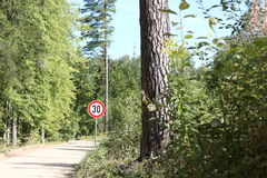 Forest road Stock Photos