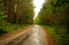 Forest road after rain. Stock Images