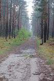 Forest road after rain Stock Image