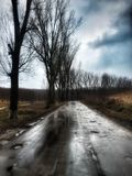 Forest Road on rainy day in February Royalty Free Stock Photos