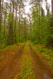 Forest Road on a Rainy Day Royalty Free Stock Image