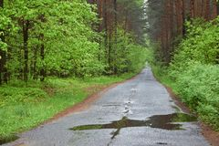 Forest road. Rainy day, spring. Forest road. Spring rainy day. Poland, Europe Royalty Free Stock Photos