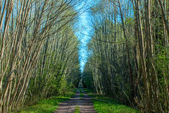 Forest Road. That ran through the green trees Stock Image