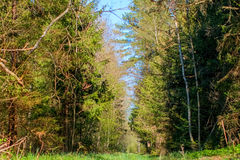 Forest Road. That ran through the green trees Royalty Free Stock Photo