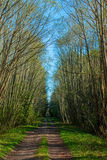 Forest Road. That ran through the green trees Stock Photo