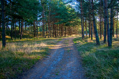 Forest Road Royalty Free Stock Images