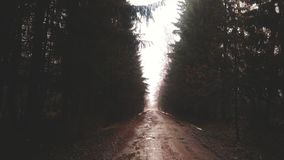 Forest road. Russian forest road Stock Image