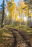 Forest road. Sharp turn of the forest road in the fairy autumn forest Stock Photos