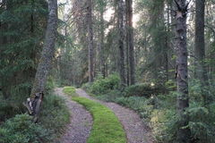 Forest road. A small forest road going thru the forest Stock Photos