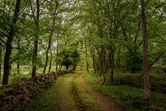 Forest road. A small road through a lush forest Stock Photography