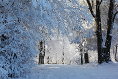 Forest and road in the snow Royalty Free Stock Photos