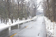The forest road after snow Royalty Free Stock Photo