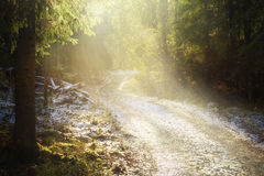 Forest road with snow. In sunlight Stock Photo