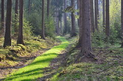 Forest road Stock Image