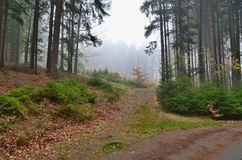 Forest road, south Bohemia. View of forest road, south Bohemia, Czech Republic Stock Image