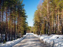 Forest road in spring Stock Images