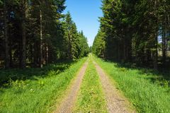Forest road with spruce Royalty Free Stock Photo