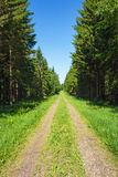 Forest road with spruce trees lined Royalty Free Stock Photography
