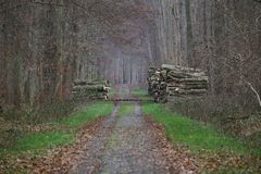 Forest Road With Stacks Of-Holz Stockfotos