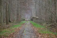 Forest Road With Stacks Of trä Arkivbild
