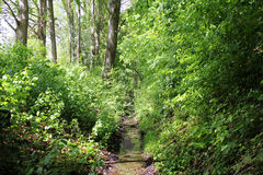 Forest Road. With a stream and sun rays Royalty Free Stock Photography