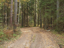 Forest road strewn with fallen yellow leaves in autumn forest old Royalty Free Stock Photos