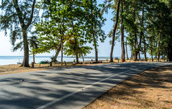 Forest road in the summer Stock Photography