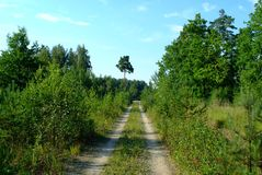 Forest road in summer royalty free stock image